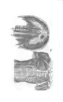 Sivu 207