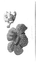 Sivu 240