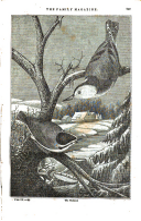 Sivu 249