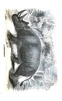 Sivu 31