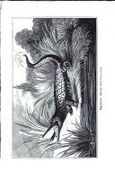 Sivu 154