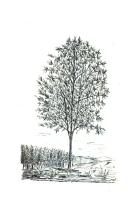 Sivu 463